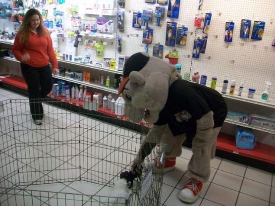 SouthPaw Pet Store 2